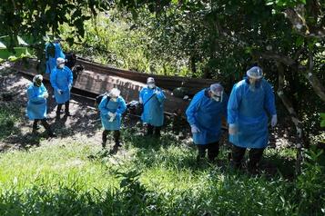 Brésil: des indigènes réfugiés dans la forêt pour échapper au coronavirus)