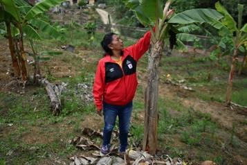 En Colombie, la mort aux trousses pour les activistes autochtones )