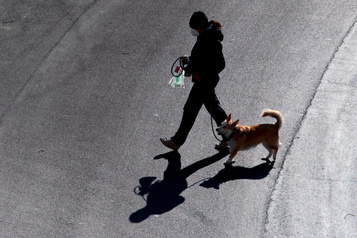 Promener son chien autemps dela COVID-19