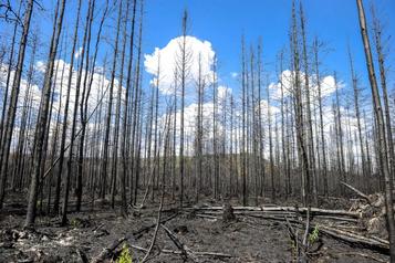 Lac-Saint-Jean: un incendie de forêt qui laissera des traces longtemps)