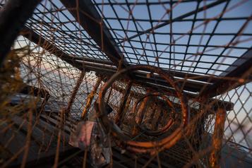 Nouvelle-Écosse Une Première Nation lance sa pêche commerciale au homard «autoréglementée »)