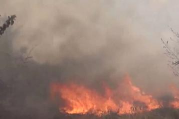 Incendies en Bolivie Deux provinces en «état de catastrophe», des aires protégées menacées)