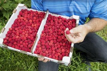 Ottawa songe àpermettre davantage de pesticides dans lespetits fruits )