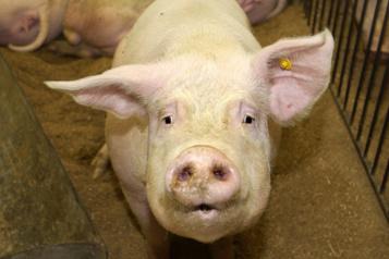 Espagne Les méga-élevages polluent gravement l'eau, dénonce Greenpeace