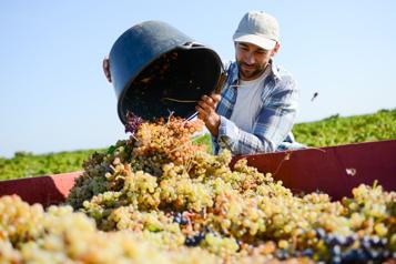 Le vin, une industrie de «mâles blancs»?)