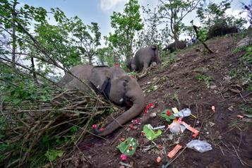 Inde Découverte de 18 dépouilles d'éléphants, a priori morts foudroyés)