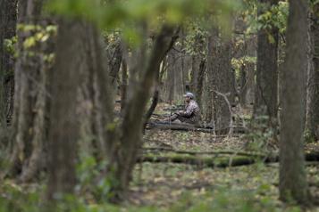 Conseil d'agglomération de Montréal Les élus pressent Québec de bannir la chasse dans toute l'île)
