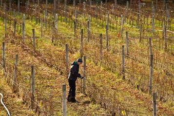 Le travail des vignerons avant la fin du printemps