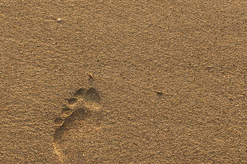 Les secrets de l'arche du pied élucidés