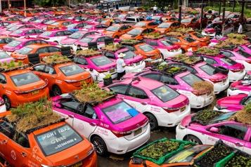 Bangkok Des taxis convertis en potagers, faute de clients)
