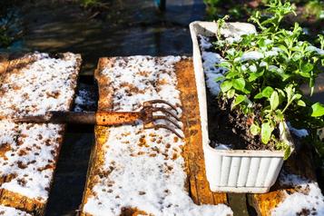 Les neiges hâtives sont-elles une bénédiction ouundésastre?