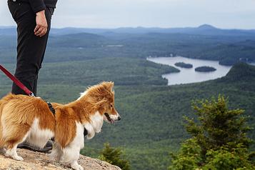 Willie et Lillie à la montagne)
