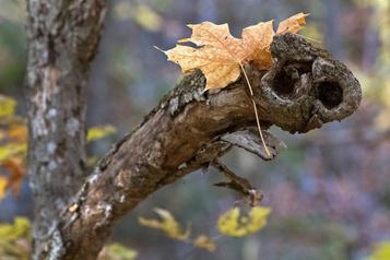 Mission photographique: l'automne érable