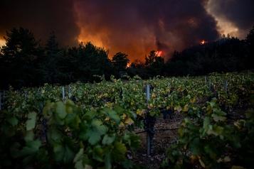 Les vignobles de Napa Valley dévorés par les flammes)