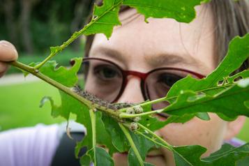 Cultiver la passion des insectes)