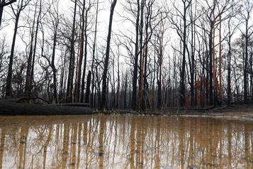Australie: la pluie fait le bonheur des pompiers et des fermiers