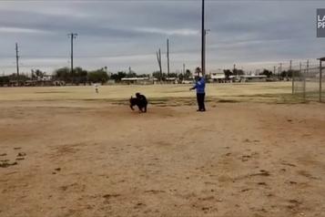 Incroyable mais vrai: arrêt-court canin