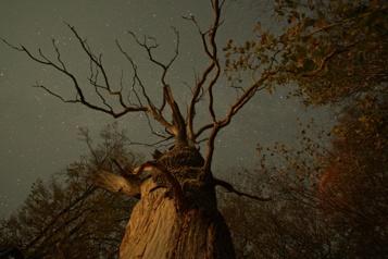 The Hidden Life of Trees La grande beauté desarbres★★★★)