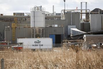 Éclosion dans l'usine de Cargill: action collective en Alberta)