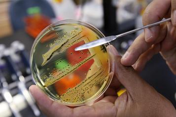 Une éclosion de salmonellose dans cinq provinces)