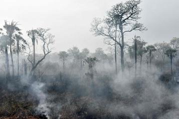 Brésil: trois fois plus d'incendies cette année au Pantanal)