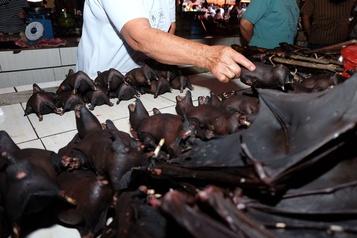 Indonésie: les chauves-souris toujours au menu malgré le coronavirus