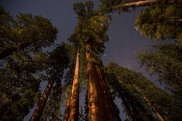 Des séquoias rebaptisés enCalifornie)