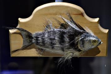 Histoires de pêche au Musée de la civilisation: un poisson «gros comme ça»)