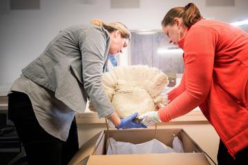 Pointe-à-Callière: décaissage des premiers objets précolombiens