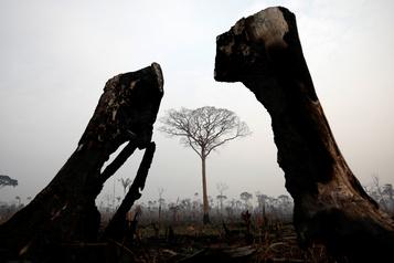 Brésil: des centaines de nouveaux incendies en Amazonie