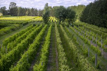 Le quiz viticole Connaissez-vous ces tendances du vin? )