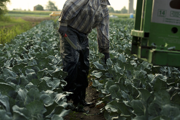 Québec: la part de l'emploi moins qualifié recule