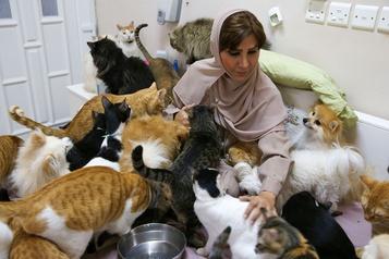 Oman La femme aux 500chats)
