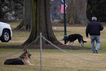 «Incident de morsure» Les chiens de Biden renvoyés de la Maison-Blanche)