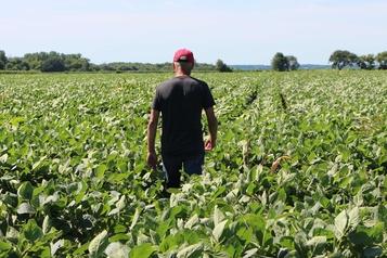 Les agriculteurs touchent «le gros lot» avec l'accord É.-U.-Chine, selon Trump
