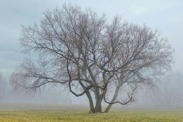 Place aux lecteurs Quel est votre arbre préféré?