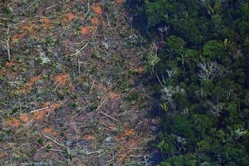 Le gouvernement brésilien promet de réduire la déforestation de l'Amazonie)