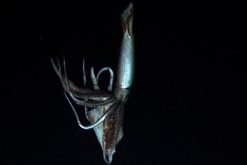 Et si le kraken existait?