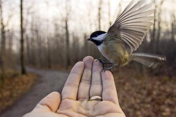 Inviter les oiseaux chez soi)
