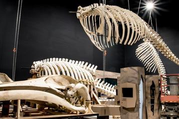 Exposition renouvelée auCentre d'interprétation des mammifères marins)