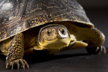 Dix nouvelles espèces en péril au Canada )