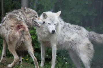Cruauté envers les animaux: une plainte dès 2015 au Zoo de Falardeau