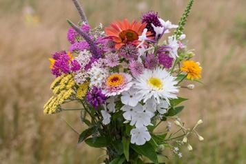 Un jardin de fleurs à couper)