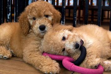 Adoptions d'animaux : une situation complexe pourlesrefuges)