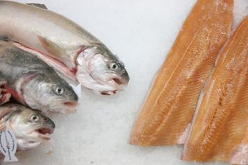 Près de 50% des produits de la mer «mal identifiés» auCanada)