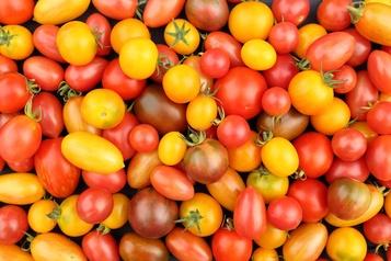 Connaissez-vous la tomate? )