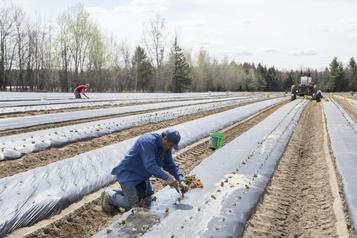 Les agriculteurs peu pressés derecourir aux «bras» offerts)