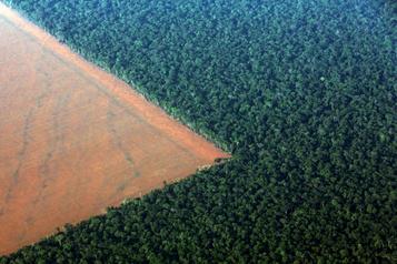 Brésil: augmentation de 85% de la déforestation en Amazonie en 2019