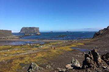 Du microplastique découvert dans l'écosystème terrestre de l'Antarctique)