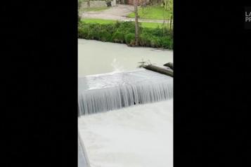 Pays de Galles Une rivière blanche comme le lait après l'accident d'un camion-citerne)